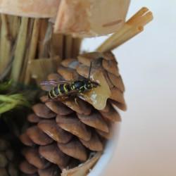 pierwszy owad